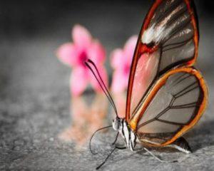 4499203_бабочка Близнецы