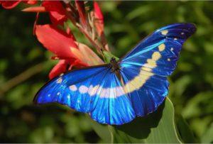4499203_бабочка весы